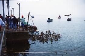 Ballesta Islands (2)