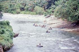 1990-7_indonesie-(224)