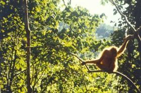 1990-7_indonesie-(386)